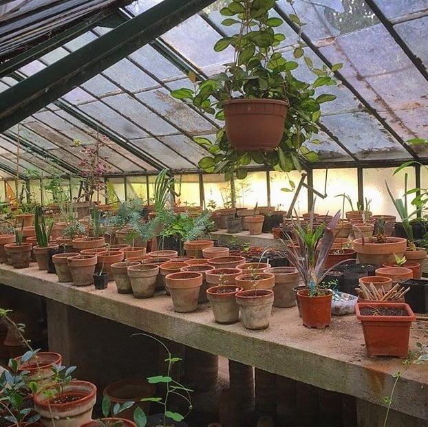 biologische kamerplanten voor duurzaam wonen