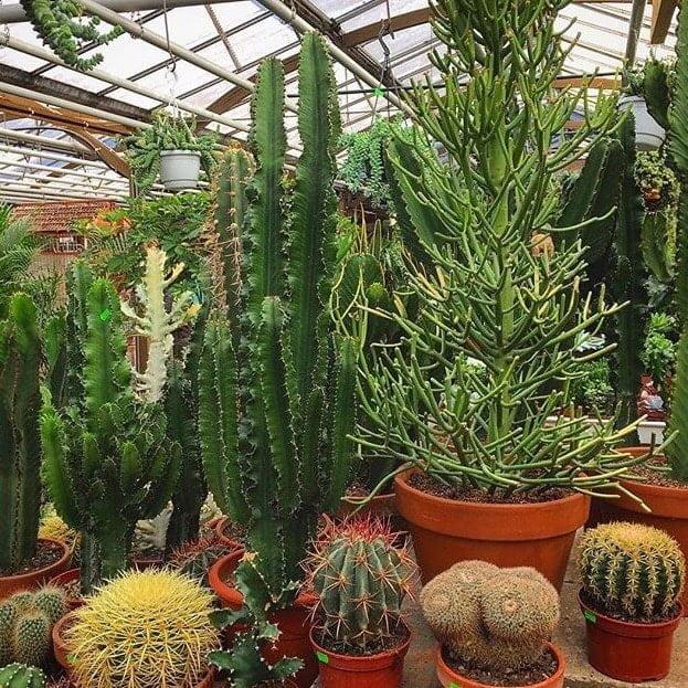 duurzame planten
