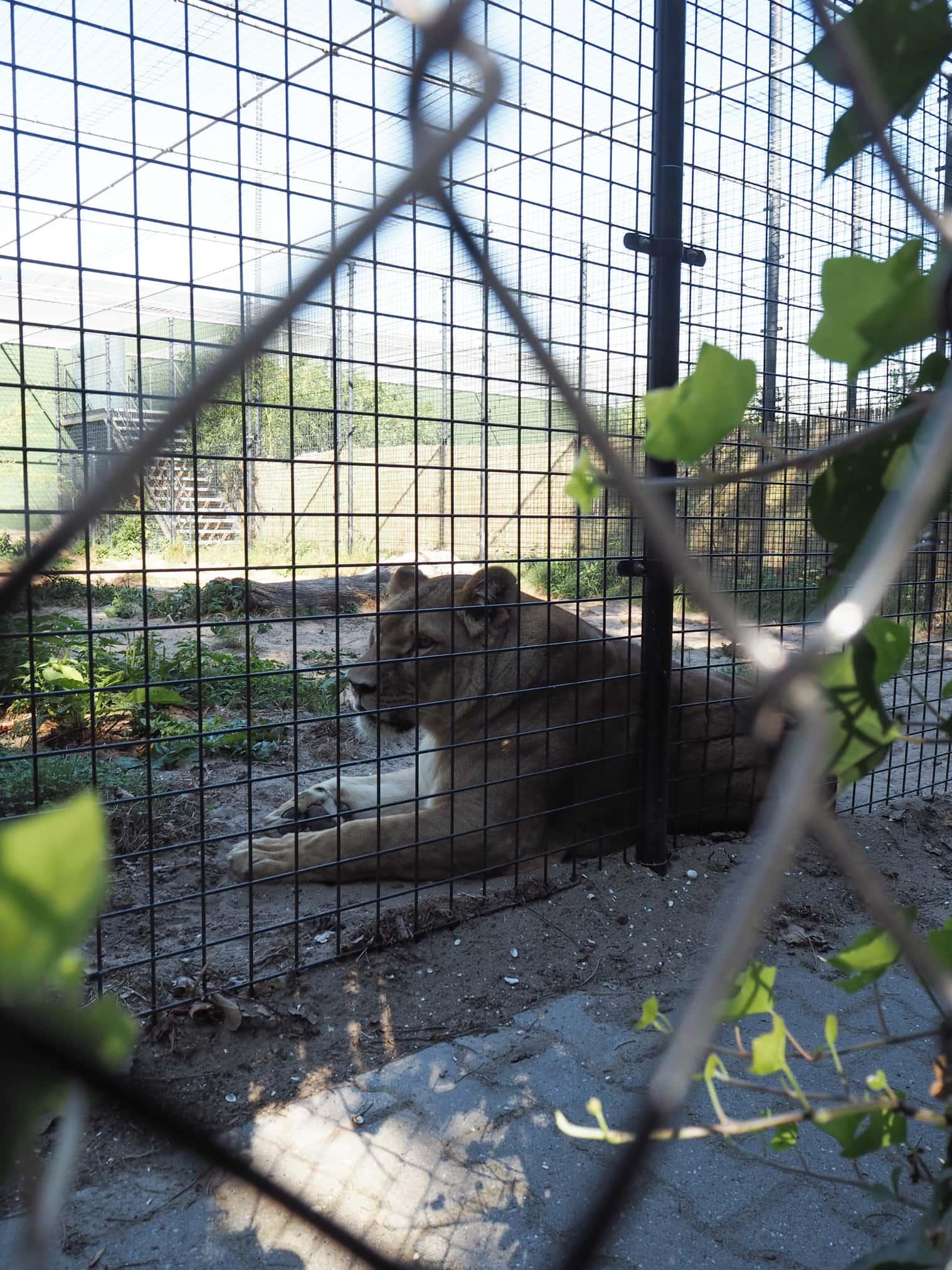 informatie over stichting leeuw