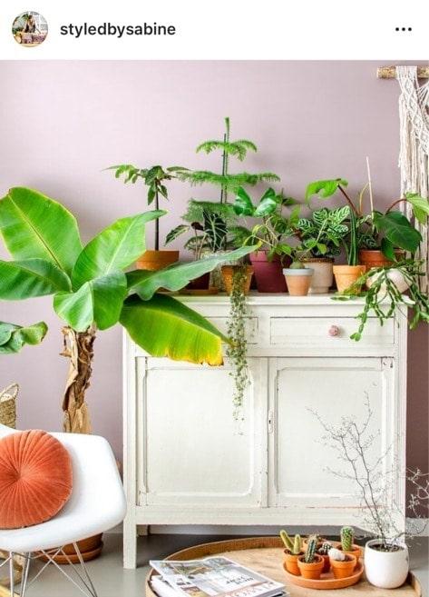 botanisch interieur op instagram
