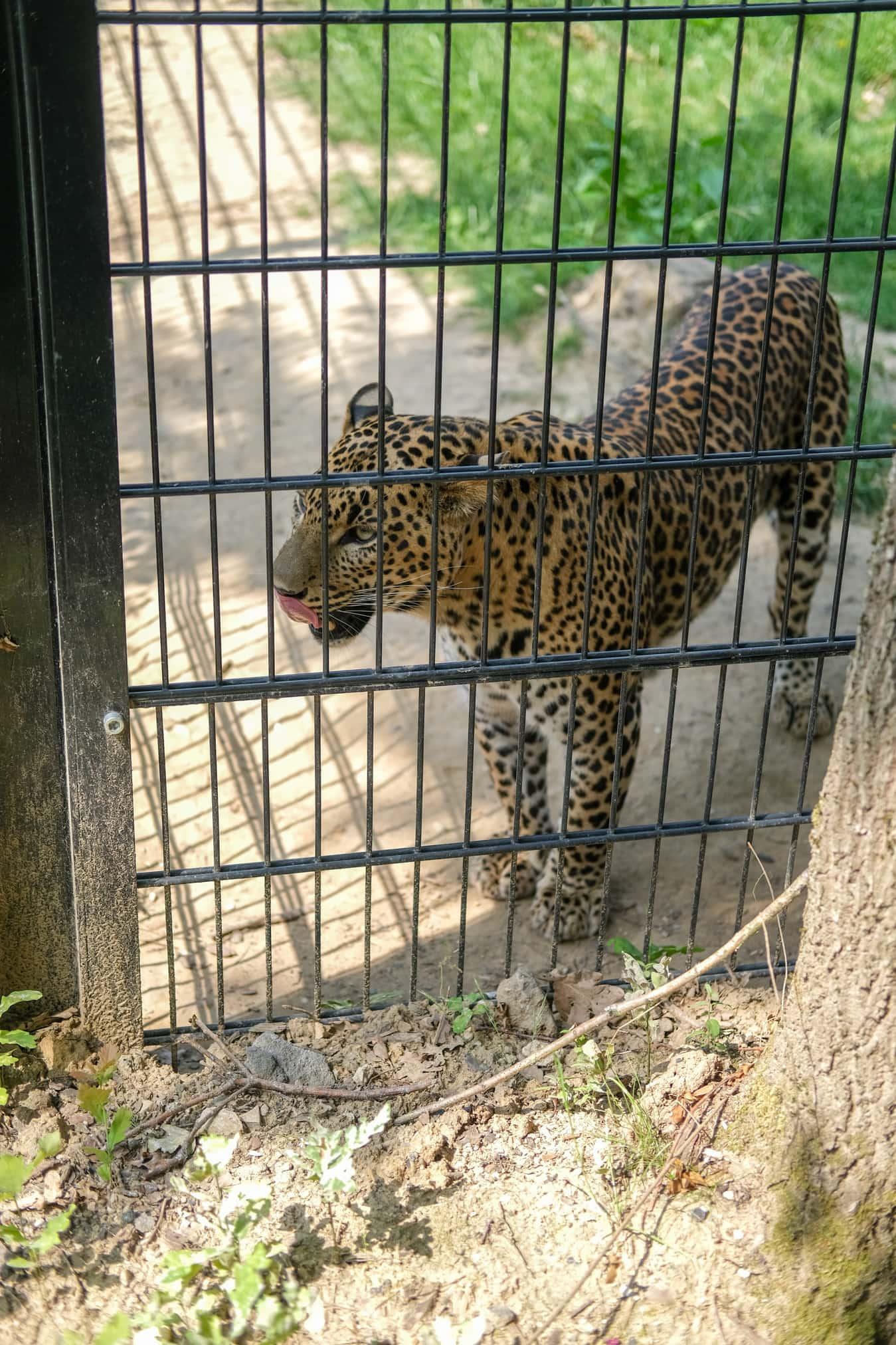 panters dierenpark landgraaf