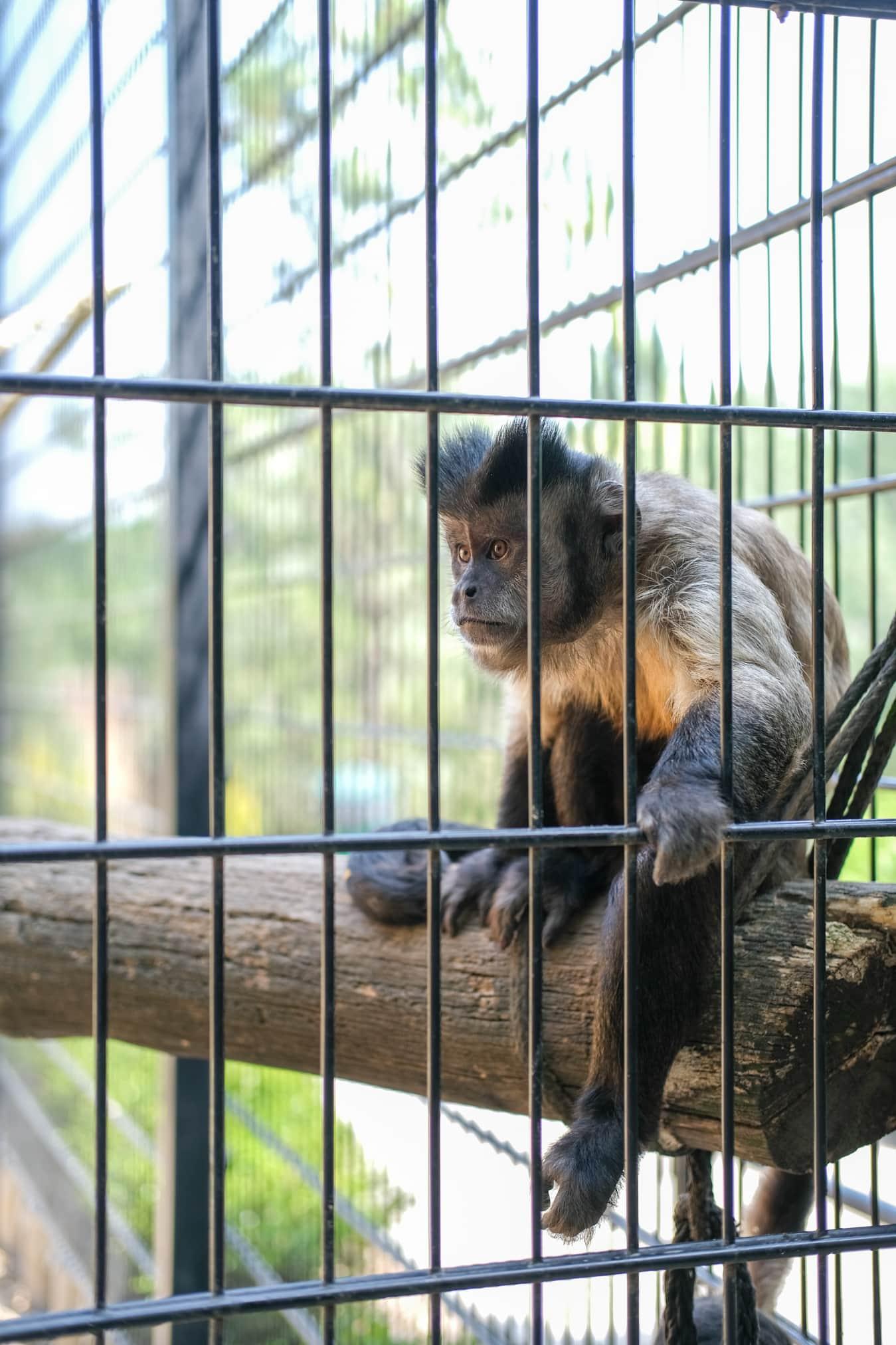 aapjes mondo verde dierentuin