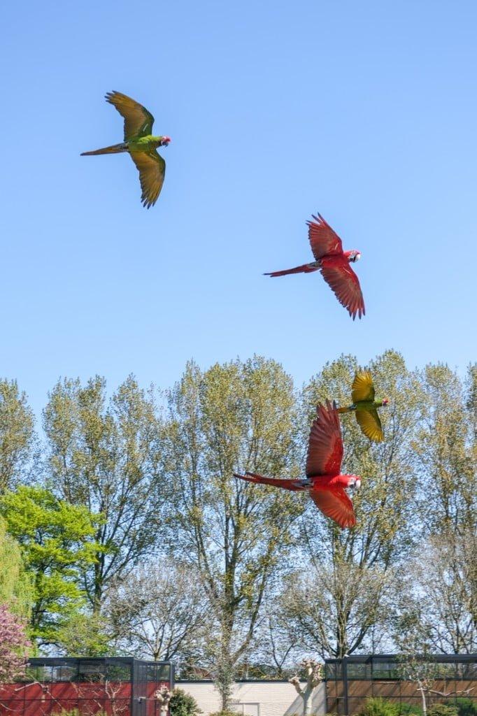 vogelpark avifauna bezoek