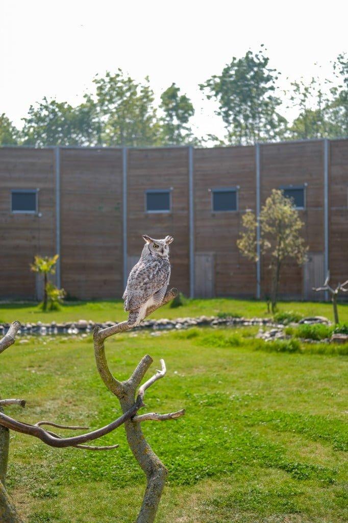 leukste zoo in nederland