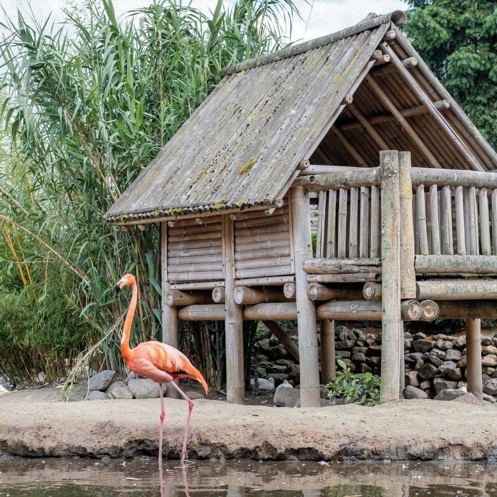 4 bijzondere dierentuinen in nederland