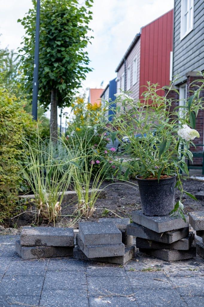 duurzame tuin tips