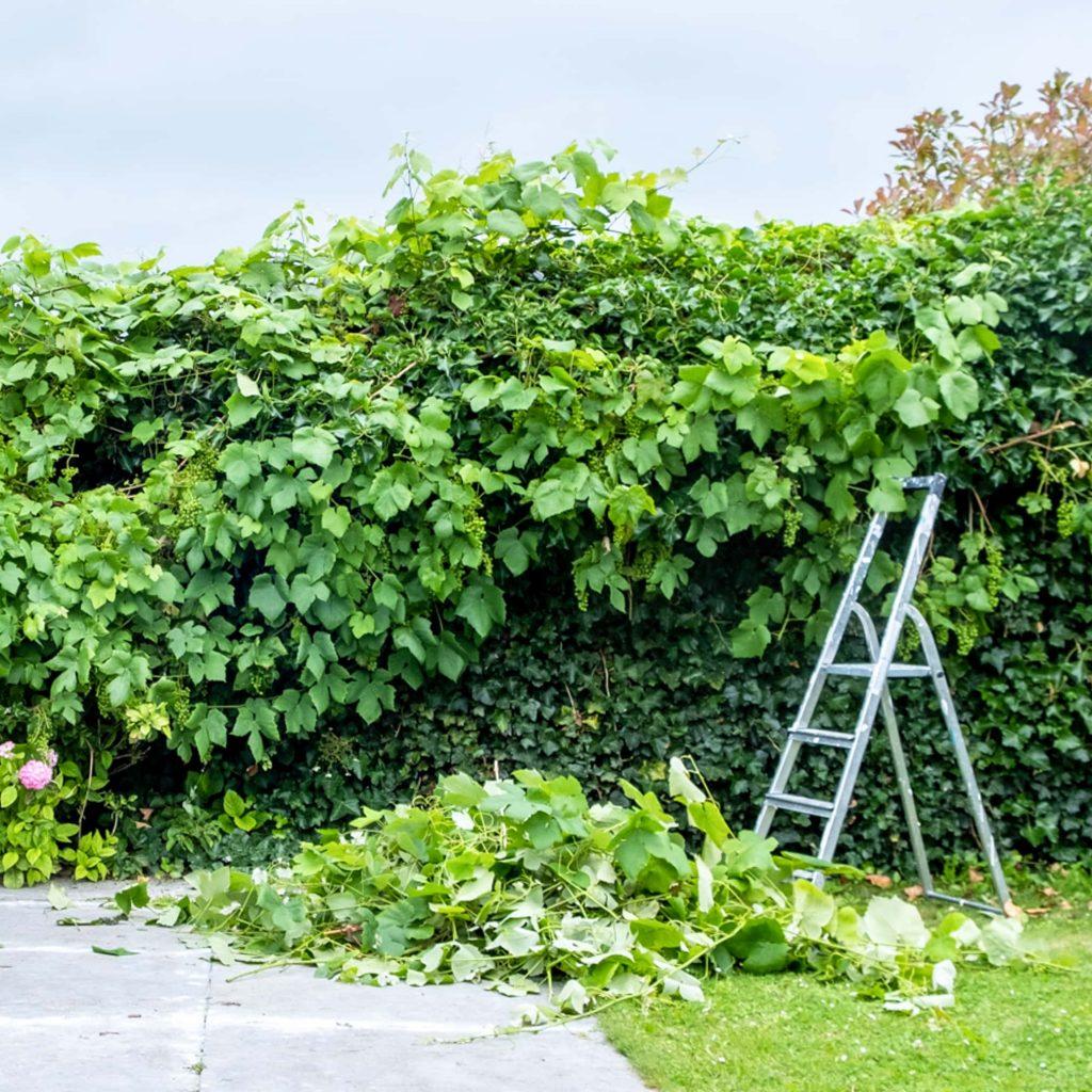 werken in de tuin tips