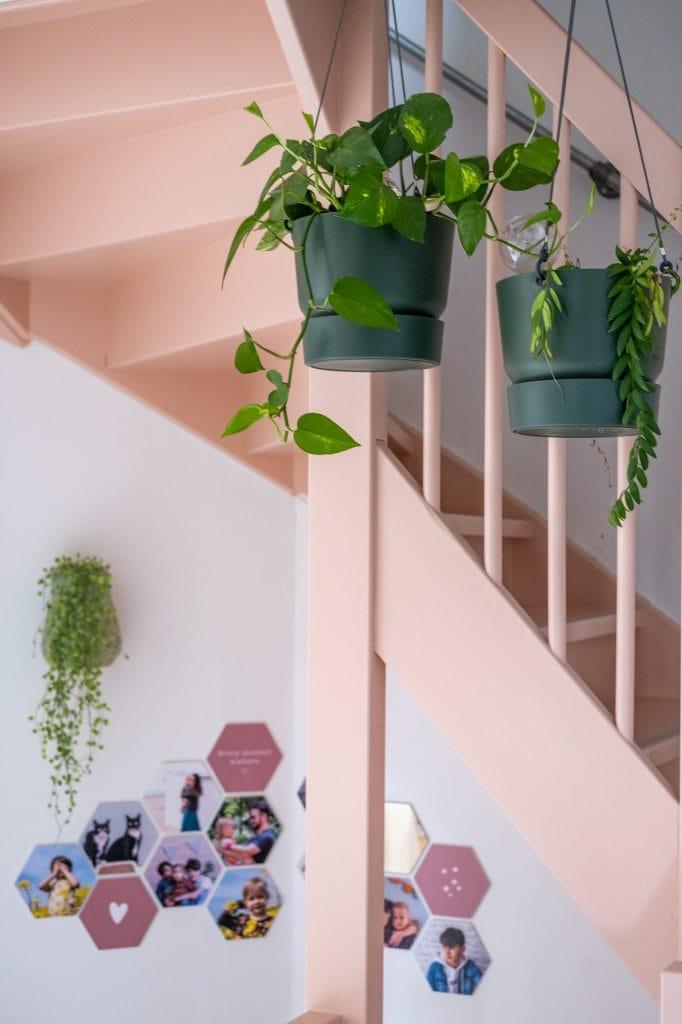 planten langs de trap