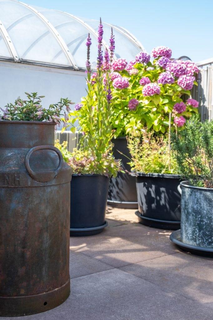 dakterras planten verzorgen