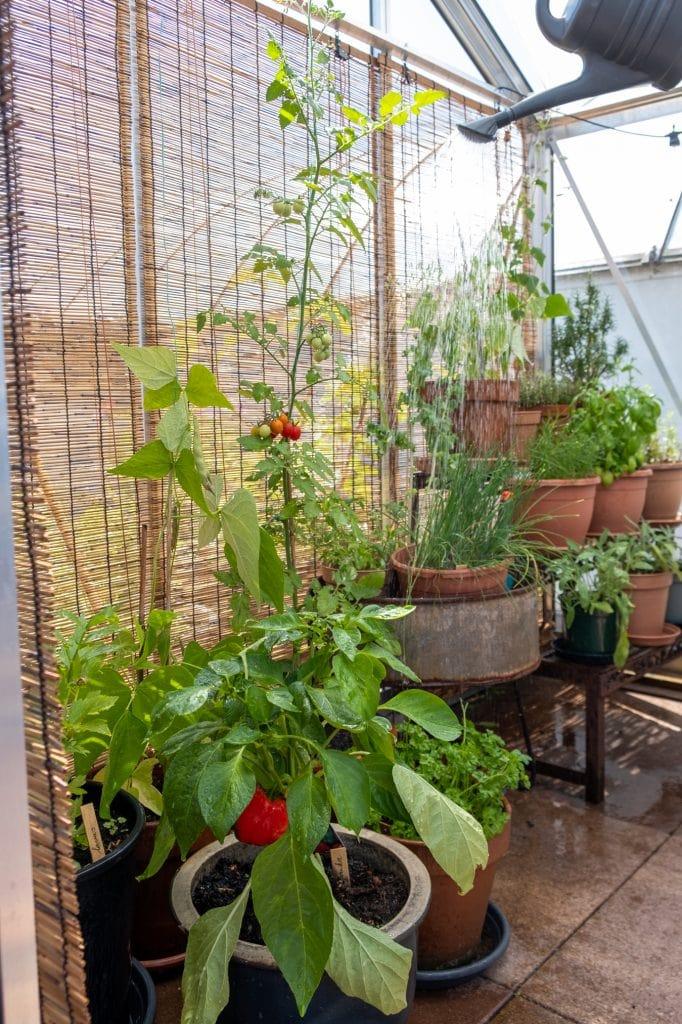 planten tafel in glazen tuinhuis