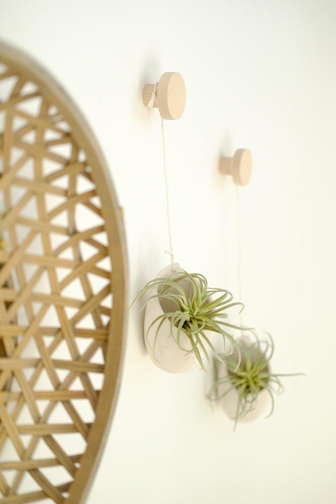 airplants hangend aan de muur