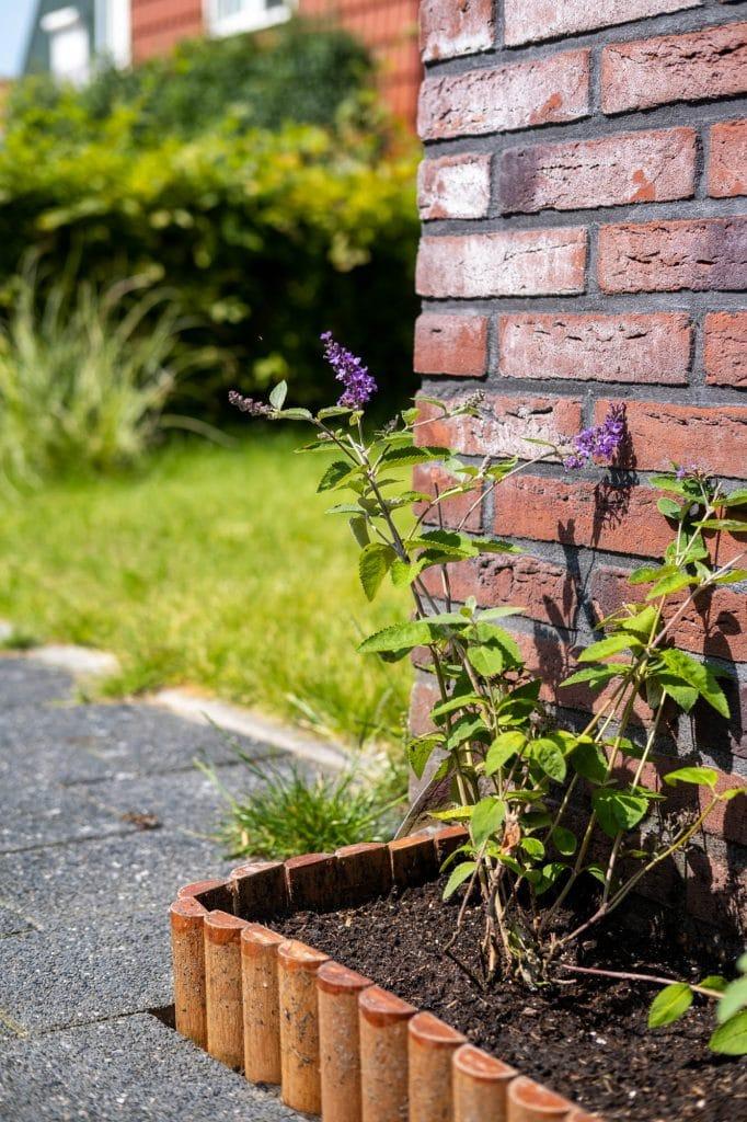 vlinderstruik inspiratie geveltuintje