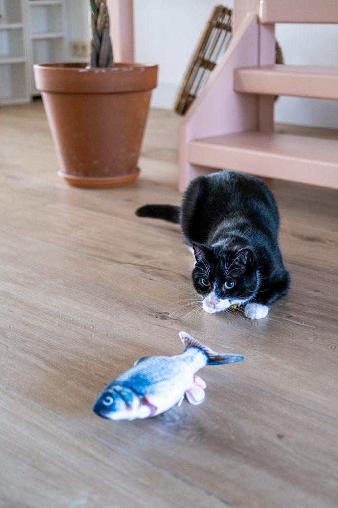kattenspeelgoed tips