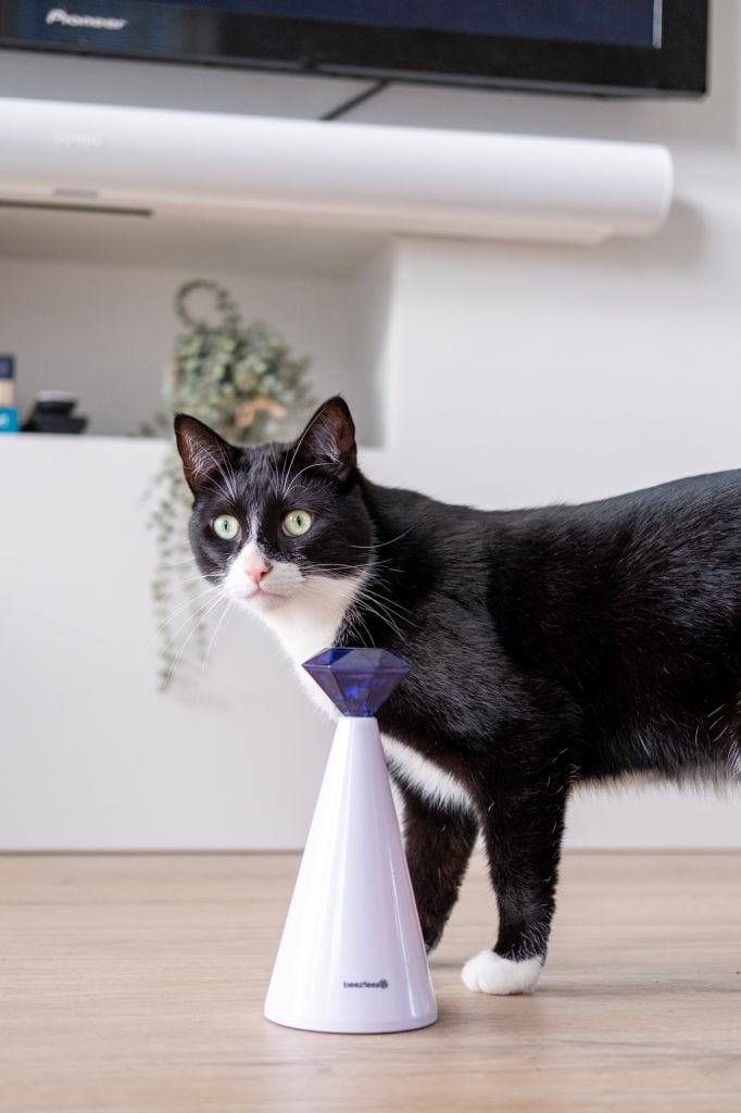 leukste speelgoed voor energieke katten